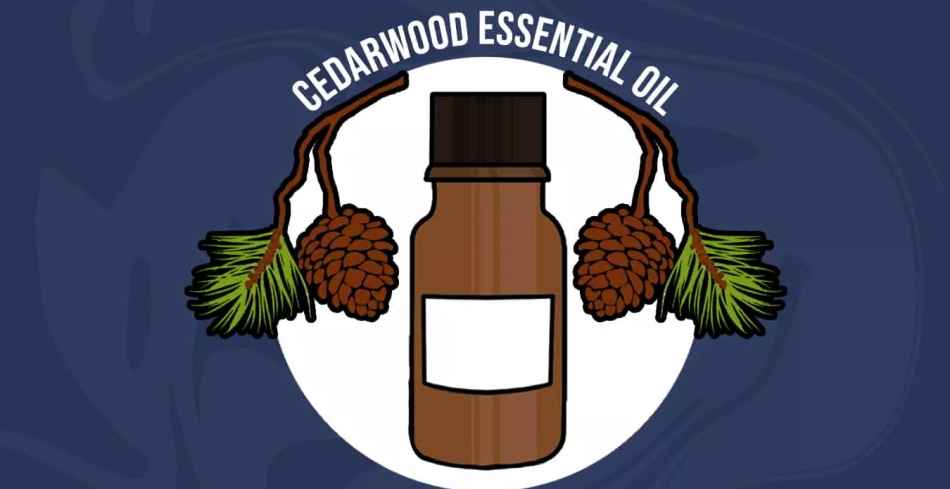 apply Cedarwood Oil